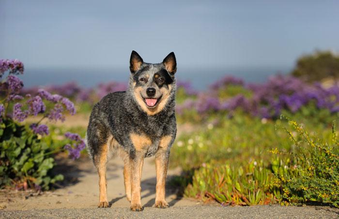 Mammary Tumors in Dogs - Horseman's News